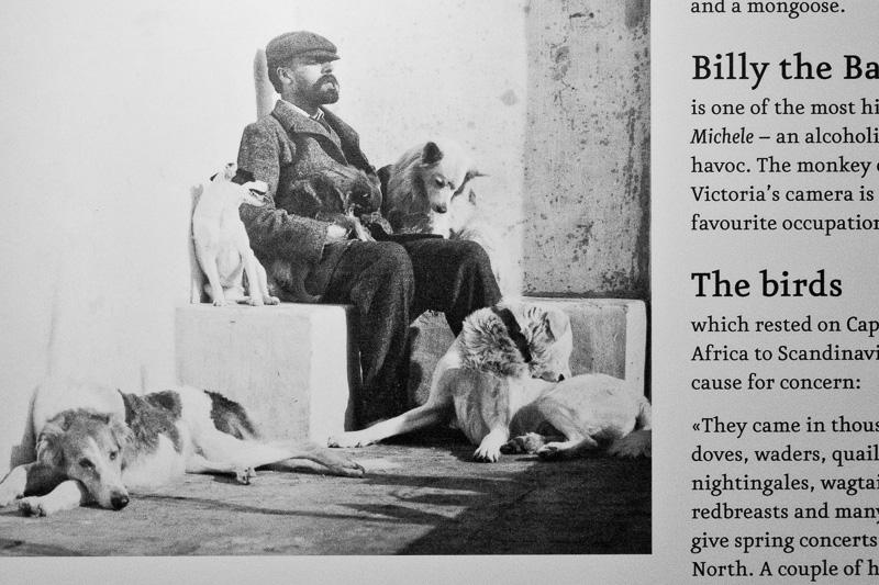 Axel Munthe seduto accanto ai suoi cani