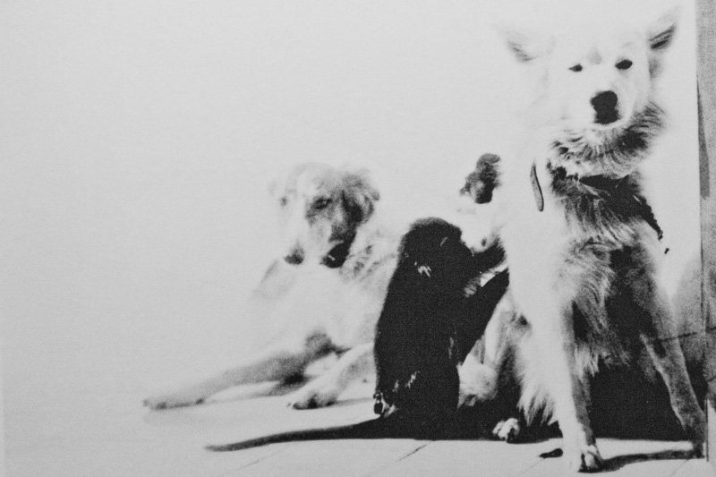 I cani di Axel Munthe