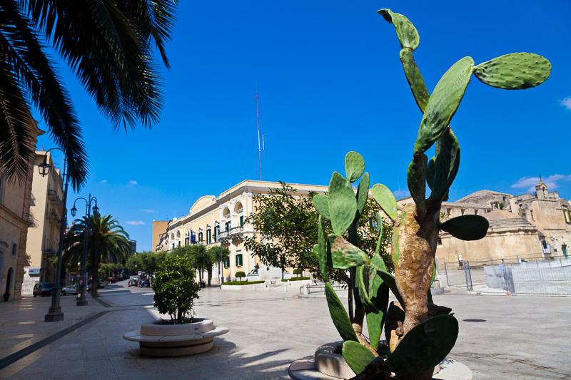 Cactus in piazza Vittorio Veneto