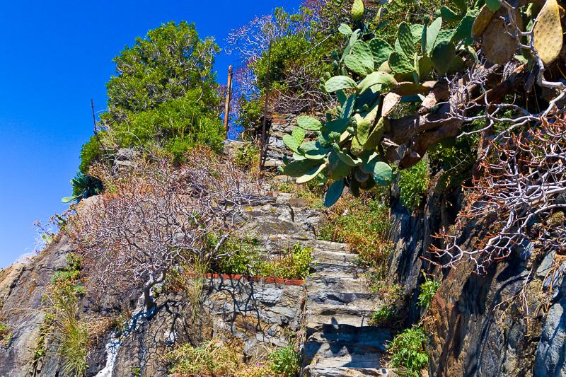 Una scalinata ricca di piante grasse