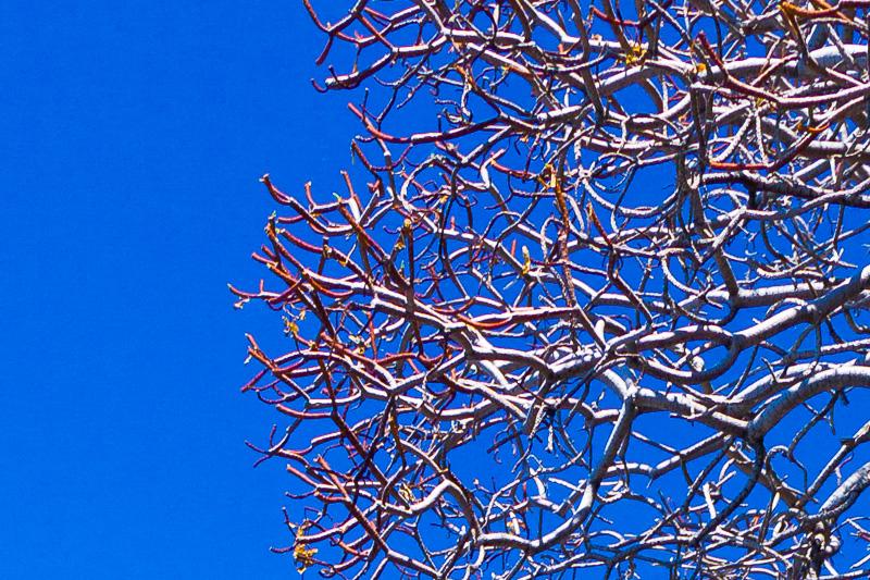 I rami secchi di un albero