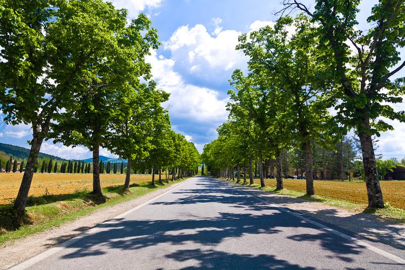 Strada alberata