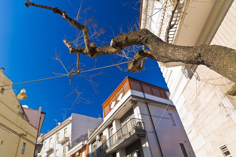 Il tronco di un albero spoglio